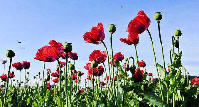 In der Pause geht's in die Natur. Frische Luft und blühende Flora leisten zur Erholung ihren Beitrag © Robert Herbst