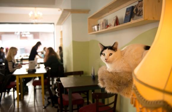 Café Schnurrke: Kuchen, Kaffee, Katze