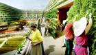 Urban Gardening neu definiert
