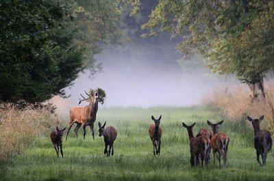 Natur erleben in Wäldern: Großes Kino ohne Eintrittskarte