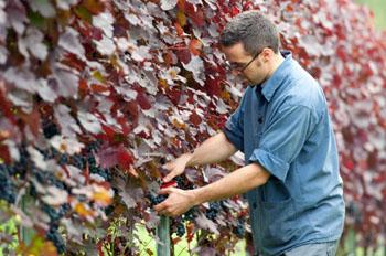 Weinbau ist viel Handarbeit. Begleiten Sie die Winzer bei ihrer Arbeit oder Wandern sie durch die wunderschöne Idylle der Weinberge ©iStock