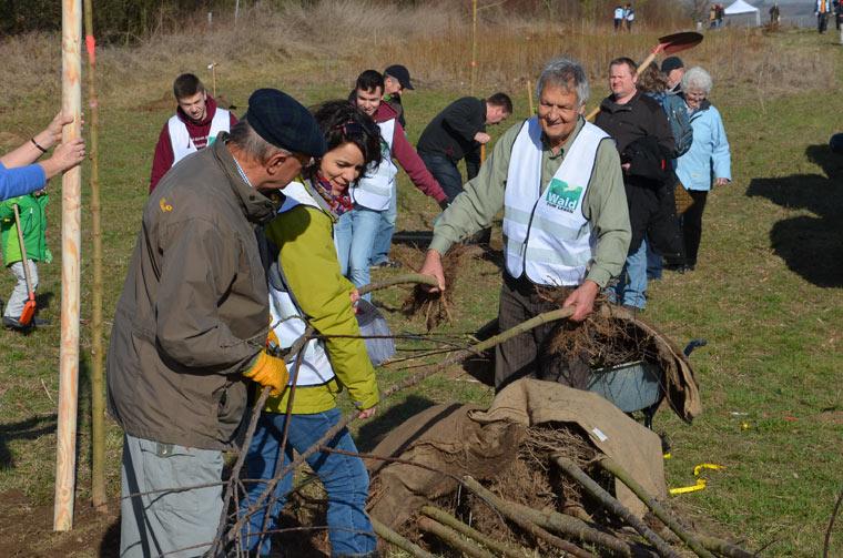Zu einer nachhaltigen Krankenkasse wechseln und gleichzeitig Baumpate werden