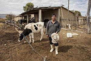 Eine Kuh kann der Start in ein neues Leben sein. © Diese Kleinbäurin hatte die Chance auf ein neues Leben. ©Ein erfolgreiches Unternehmen für Tischkicker entsteht dank Mikrokrediten. © Patricio Crooker