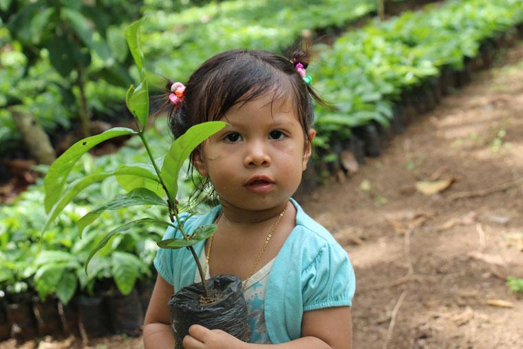 Investments in Wälder sind sehr beliebt