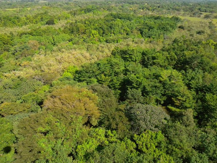 Lange Laufzeiten sind bei Waldinvestments ganz normal