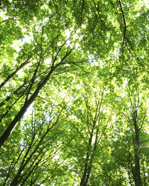 Es gibt verschiedene Möglichkeiten für nachhaltige Geldanlagen