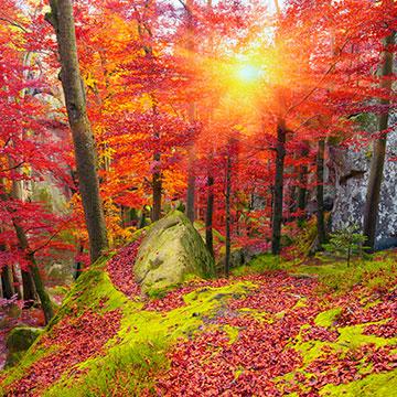 Die Schönheit der alten Buchenwälder in Deutschland