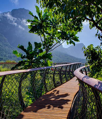 Die erstaunlichste Baumwipfelbrücke im grünen Paradies