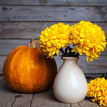Bunte Pflanzen für Balkon und Garten im Herbst