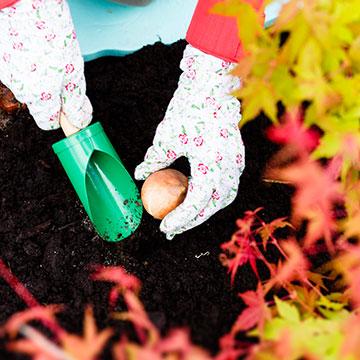 Fast das Finale: Tipps und Tricks für den Garten im September