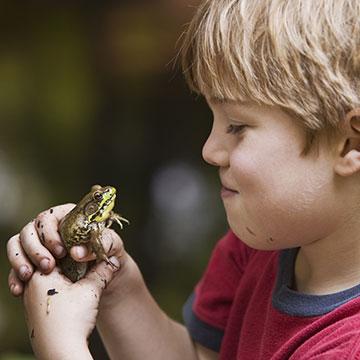 Reptilien und Amphibien in Gefahr