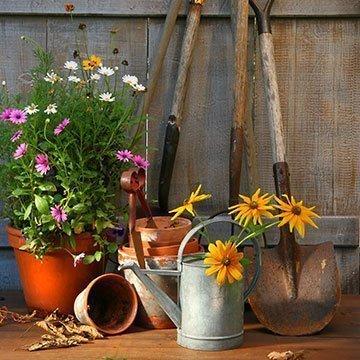 Jetzt den Garten winterfest machen: Was ist zu tun?