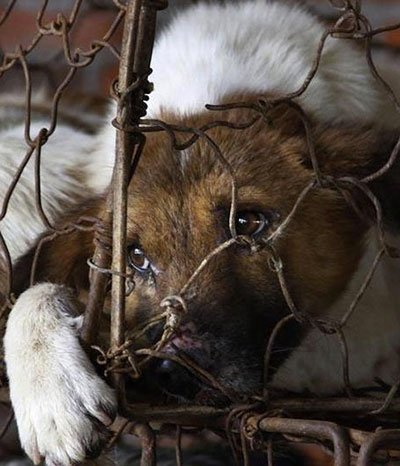 Eine Chinesin wird zur Tierretterin