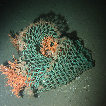 Kaltwasserkorallen gefangen in einem Fischernetz. © Veerle A.I. Huvenne, National Oceanography Centre, University of Southampton