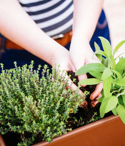 So legen Sie Ihren Kräutergarten an
