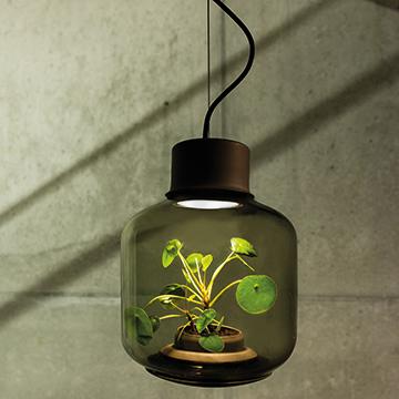 Pflanzenwachstum ohne Licht wie geht das?