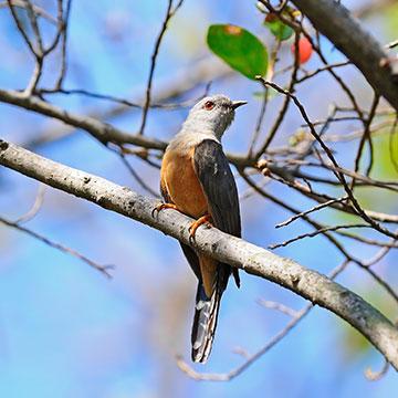 Liste der Vögel die vom Aussterben bedroht sind