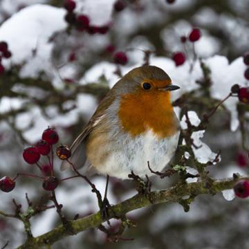 Tieren im Winter mit Futter helfen