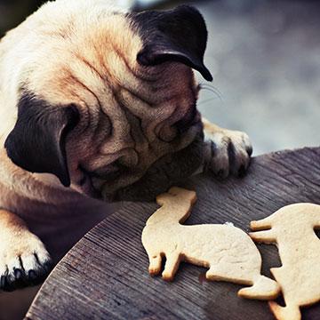 Schluss mit Gammelfleisch! Hundesnacks selber machen