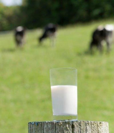 Milch als Pfeiler der Landwirtschaft