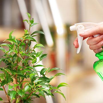 So bleiben Zimmerpflanzen garantiert gesund