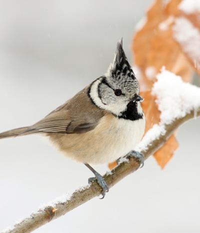 Vogelzählung, Stunde der Wintervögel