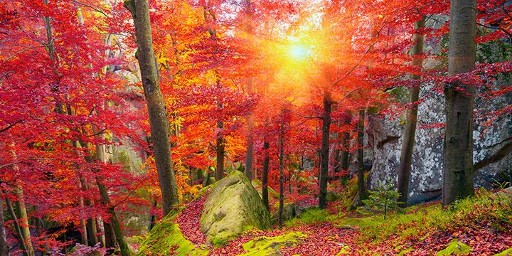 Alte Buchenwälder: Einzigartig und schützenswert
