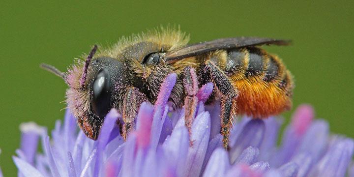 Bienen-Wettbewerb macht nicht nur Bienen glücklich