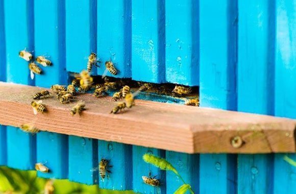 Hier summts: Ecosystem gegen das Bienensterben