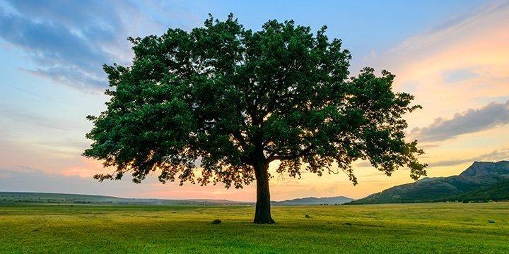 Neues Leben nach dem Tod, als Baum erblühen