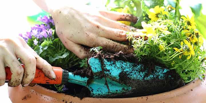 Gärtnern ohne Torf - Produkttester gesucht