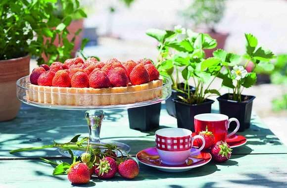 Alleskönner Erdbeere,klein,rot und voller Vitamine