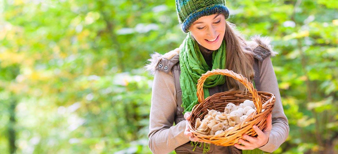 Pilze sind in aller Munde