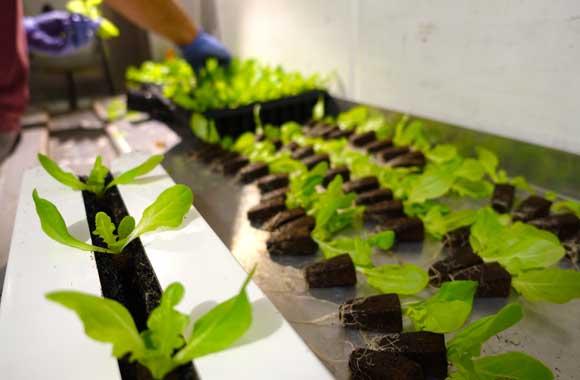 Die neue Form des Urban Farming