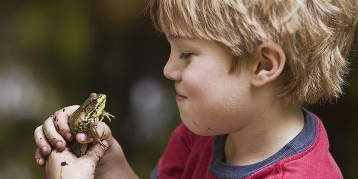 Online-Atlas der Amphibien und Reptilien