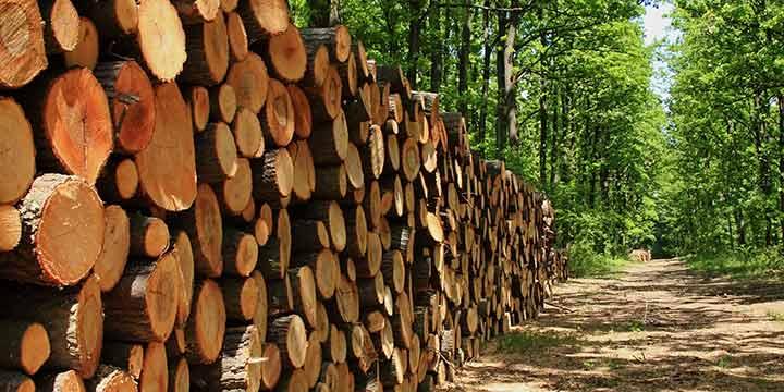 Warum Holz arbeitet und wie es verarbeitet wird