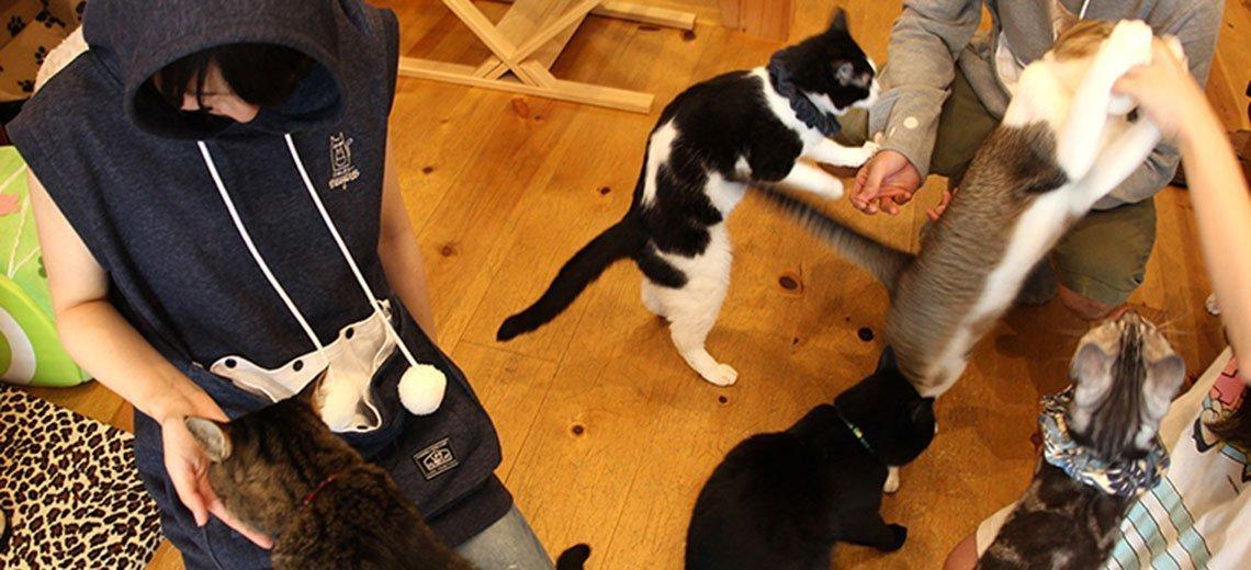 Miau! Witzige Geschenkidee für Katzenliebhaber