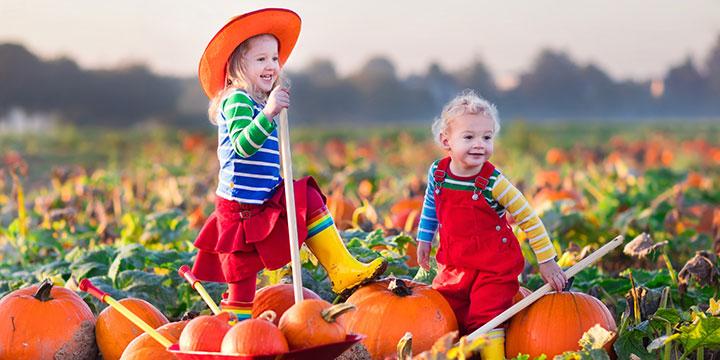 Erntedank im Garten: Den Herbst zuhause feiern