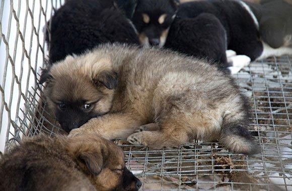 Kampf gegen das Hundeelend in China