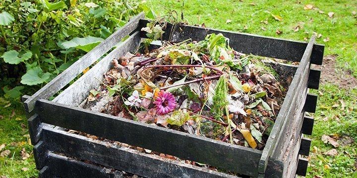 Diese Abfälle liefern Ihren Pflanzen Nährstoffe