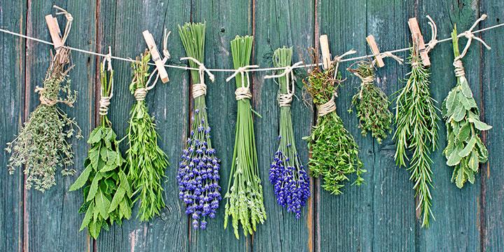 Superfoods - Die Apotheke im eigenen Garten