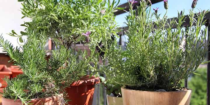 Bio Sortiment für nachhaltigeres Gärtnern
