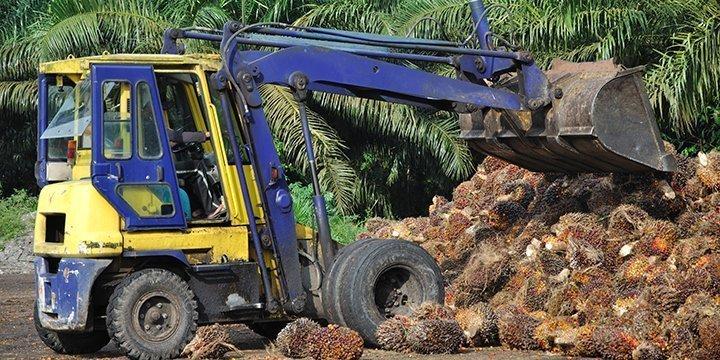 TV-Tipp: Palmöl, Fluch oder Segen?