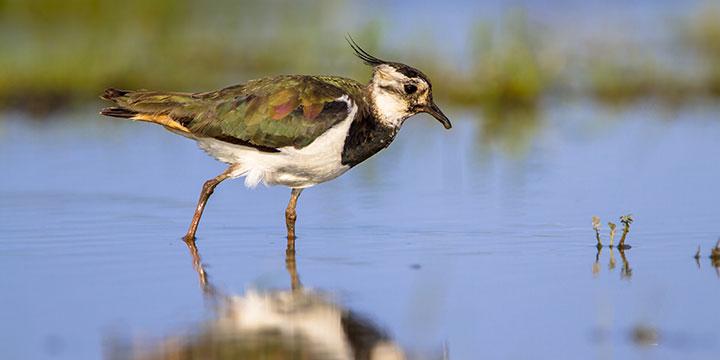 Viele Vogelarten vom Aussterben bedroht