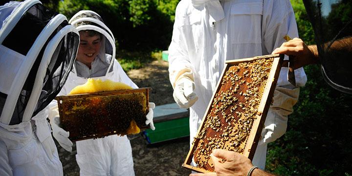 Nachhaltiger Luxus: Bio Honig aus Griechenland