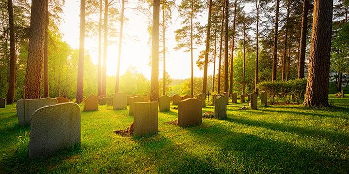 Öko-Bestattungen: So gehen, wie man gelebt hat