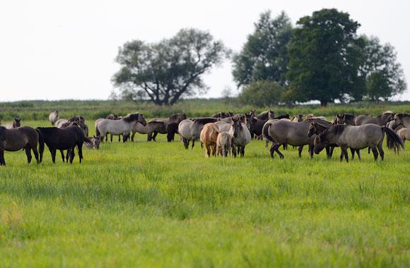 Oder-Delta: Naturparadies an der Ostseeküste