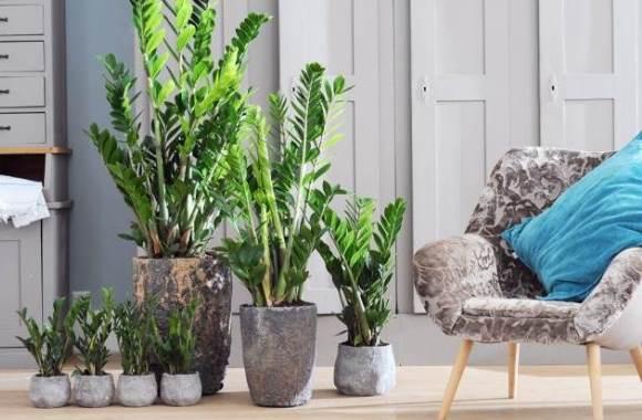 Zimmerpflanzen-Trends: Natürliches Grün sorgt für Entspannung