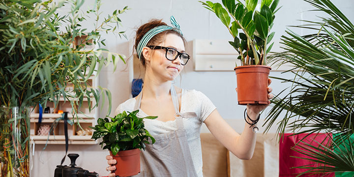 Natürliche Schädlingsbekämpfung für Zimmerpflanzen