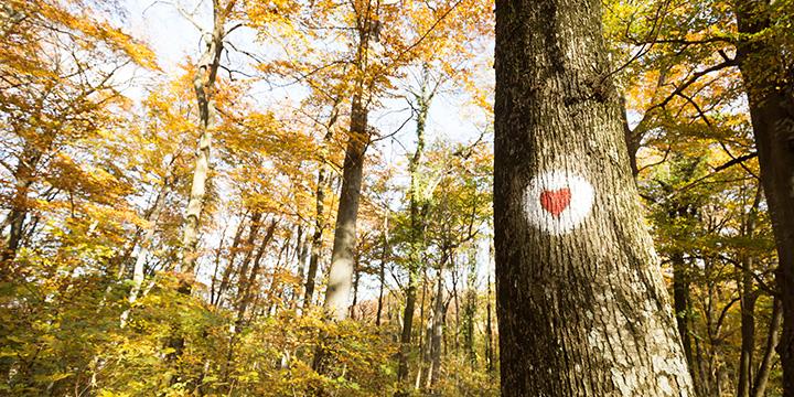 Wunderbare Wälder - Hilf mit sie zu schützen